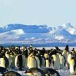 China Antarctic tourism increased by 30.5% in 2017