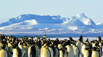 China Antarctica travelers spend an average of US$36K per trip